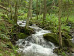 View larger image of Swift stream at LIMEHURST LAKE CAMPGROUND image #1