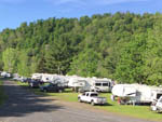 View larger image of A row of trailers parked by some trees at LIMEHURST LAKE CAMPGROUND image #6