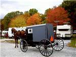 View larger image of Horse and buggy at TUCQUAN PARK FAMILY CAMPGROUND image #2