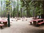 View larger image of Picnic tables at TAHOE VALLEY CAMPGROUND image #4