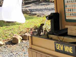 View larger image of Squirrel drinking from a water pump at HARRISONBURGSHENANDOAH VALLEY KOA image #10