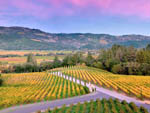 View larger image of Plenty of vineyards await you at NAPA VALLEY EXPO RV PARK image #10