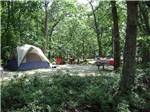 View larger image of Tent camping at MARTHAS VINEYARD FAMILY CAMPGROUND image #2