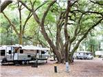 View larger image of Huge tree towering beside white trailer at JEKYLL ISLAND CAMPGROUND image #1