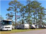 View larger image of Towering trees lining RV spots at SHERWOOD FOREST RV RESORT image #4