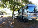 View larger image of RVs camping at SHERWOOD FOREST RV RESORT image #5