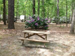 View larger image of Wooden picnic table with bush full of beautiful purple flowers at WINDING RIVER CAMPGROUND image #7