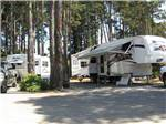 View larger image of Trailers camping in tall trees at POMO RV PARK  CAMPGROUND image #2