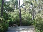 View larger image of Picnic table among the trees at POMO RV PARK  CAMPGROUND image #11
