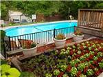 View larger image of Well landscaped and colorful floral decor surrounding community pool at MUSICLAND KAMPGROUND image #2