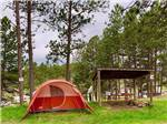 View larger image of BEAVER LAKE CAMPGROUND at CUSTER SD image #12