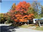View larger image of FOUR SEASONS CAMPGROUNDS at SCOTRUN PA image #1