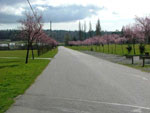 View larger image of Road leading into campgrounds at HAZELMERE RV PARK image #4