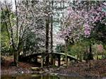 View larger image of A small foot bridge over a creek with pink flowers blooming on trees at NEWPORT NEWS PARK CAMPGROUND image #8