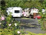 View larger image of HOLIDAY RV PARK at PHOENIX OR image #7