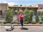 View larger image of A woman walking her dogs at CIRCLE RV RESORT - SUNLAND image #4