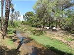 View larger image of Small creek running along palm trees at RANCHO LOS COCHES RV PARK image #3