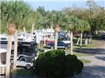 View larger image of RVs vehicles and trailers parked alongside tall palm trees at VERO BEACH KAMP image #2