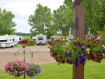 View larger image of Various colored flowers hanging on lampposts at GLOWING EMBERS RV PARK  TRAVEL CENTRE image #12