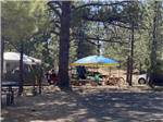 View larger image of Horseback riders on the trail at BRYCE CANYON PINES STORE  CAMPGROUND  RV PARK image #5