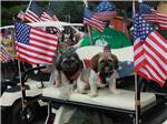 View larger image of Two cute dogs on a golf cart with USA flags at KING PHILLIPS CAMPGROUND image #4