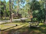 View larger image of Swimming pool at campgrounds at LION COUNTRY SAFARI KOA image #3