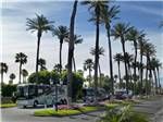 View larger image of RVs parked at OUTDOOR RESORT PALM SPRINGS image #1