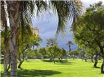 View larger image of Huge palm tree on golf course with dark clouds in background at OUTDOOR RESORT PALM SPRINGS image #9