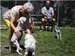 View larger image of Dog exercise area at BAY BAYOU RV RESORT image #5
