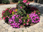 View larger image of Flowers at campground at SANDY OAKS RV RESORT image #2