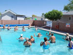 View larger image of Two large groups of campers in community pool playing volleyball at SHANGRI-LA RV RESORT image #7