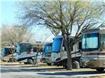 View larger image of A row of motorhomes with a tree at TROPHY GARDENS image #7