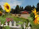 View larger image of Sun flowers at JIM  MARYS RV PARK image #3