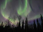 View larger image of Northern lights can be seen at TOK RV VILLAGE  CABINS image #9