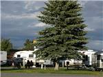 View larger image of Trailers camping with large pine tree on cloudy day at INDIAN CREEK RV PARK  CAMPGROUND image #2