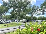View larger image of STAGECOACH RV PARK at ST AUGUSTINE FL image #4