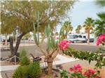 View larger image of Flowers at campground at HOLIDAY PALMS RESORT image #3