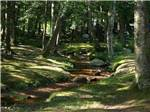 View larger image of Stream in the woods at TWIN TAMARACK FAMILY CAMPING  RV RESORT image #5