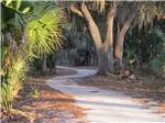 View larger image of Trail leading to campground at THE GREAT OUTDOORS RV NATURE  GOLF RESORT image #9
