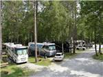 View larger image of Motorhomes parked in gravel sites at DORSET RV PARK image #2