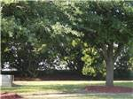 View larger image of A grassy area with trees at BARNYARD RV PARK image #7