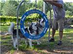 View larger image of Dog exercise area at COMPASS RV PARK image #7