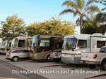 View larger image of Class A motorhomes backed in  at ANAHEIM RV PARK image #6
