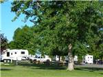 View larger image of Large tree with RVs and trailers parked at UMATILLA MARINA  RV PARK image #2