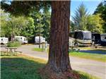 View larger image of The paved road that runs thru at RIVERWALK RV PARK  CAMPGROUND image #3