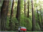 View larger image of A VW bus driving alongside of redwood trees at RIVERWALK RV PARK  CAMPGROUND image #10