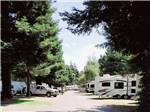 View larger image of One of the roads that go thru the campsites at RIVERWALK RV PARK  CAMPGROUND image #12