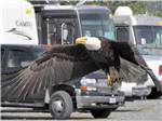 View larger image of Carved bears holding a welcome sign at EAGLES REST RV PARK  CABINS image #2