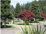 View larger image of Paved sites with tall trees next to them at PHEASANT RIDGE RV RESORT image #4