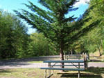 View larger image of Picnic tables at SHADOW MOUNTAIN RV PARK  CAMPGROUND image #6